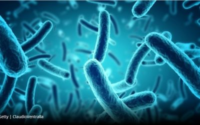 Our genes shape our gut bacteria, new research shows