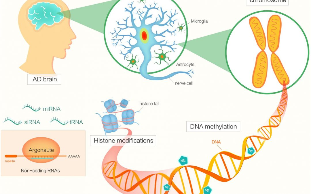 Epigenetic changes in the brain drive late-onset Alzheimer's disease