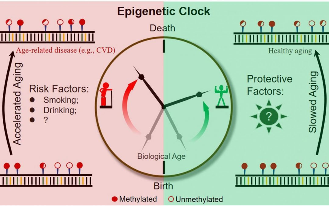 FOXO Technologies Exclusively Licenses Epigenetic Clocks PhenoAge and GrimAge from UCLA