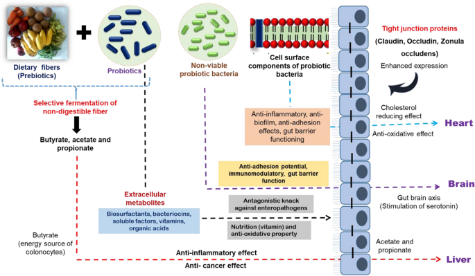 Postbiotics-parabiotics: the new horizons in microbial biotherapy and functional foods   Microbial Cell Factories   Full Text